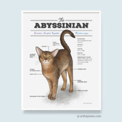 Abyssinian Cat Watercolor Art Print Diagram