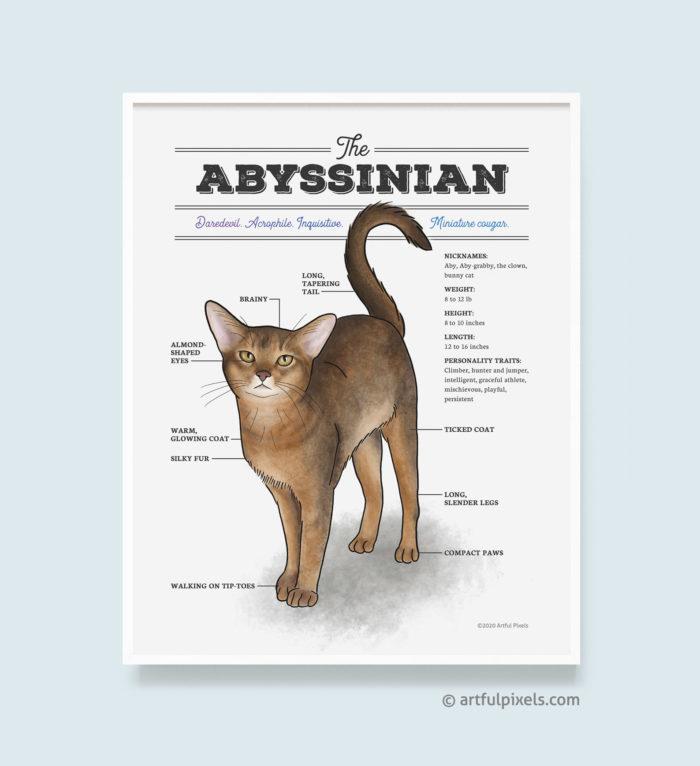 Abyssinian Cat Watercolor Art Print Diagram