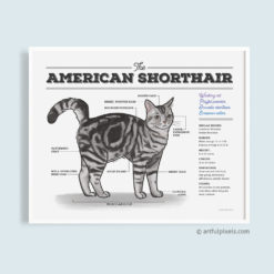 American Shorthair Cat Diagram - Watercolor Print