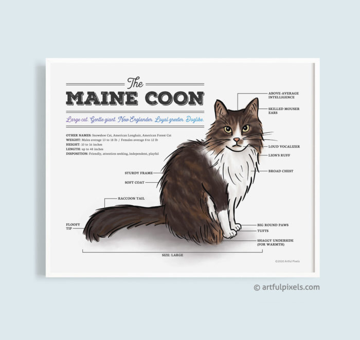 Maine Coon Cat Watercolor Print