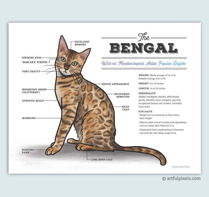 Bengal cat art print diagram chart