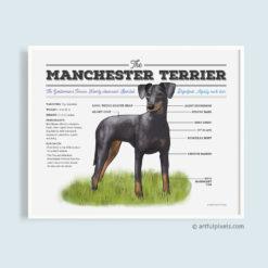 Manchester Terrier Dog Art Diagram Chart