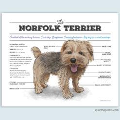 Nortfolk Terrier Watercolor Art Print