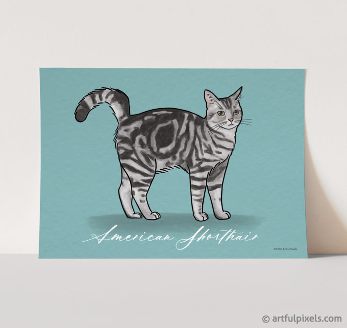 American Shorthair tabby cat art print with turquoise background