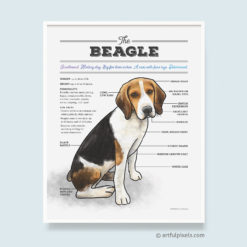 Beagle dog breed chart art print