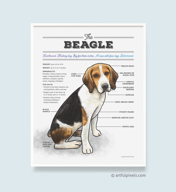 Beagle dog breed chart art print