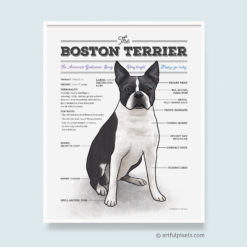 Boston Terrier Wall Art with fun diagram chart