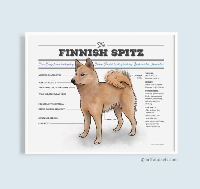 Finnish Spitz diagram chart art poster