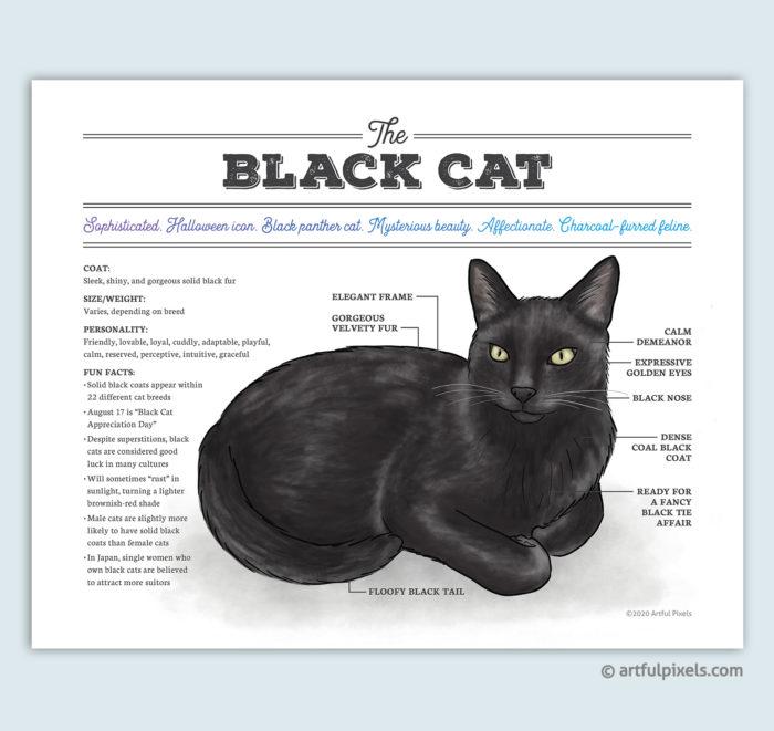 Black Cat Infographic Diagram