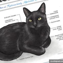Black Cat illustration close-up