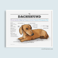 Dachshund Dog Infographic Art Print