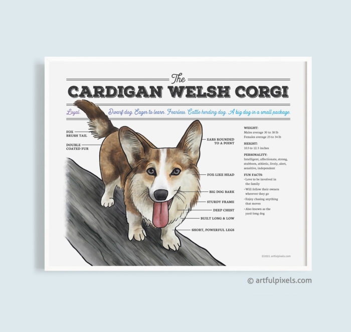 Cardigan Welsh Corgi Dog Diagram Art Print