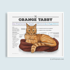 Orange Tabby Cat Diagram Art Print