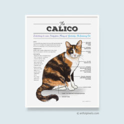 Infographic drawing of the calico cat