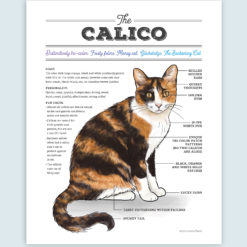 Artwork featuring an infographic diagram of the calico cat