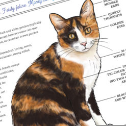 Closeup of artwork featuring an infographic diagram of the calico cat
